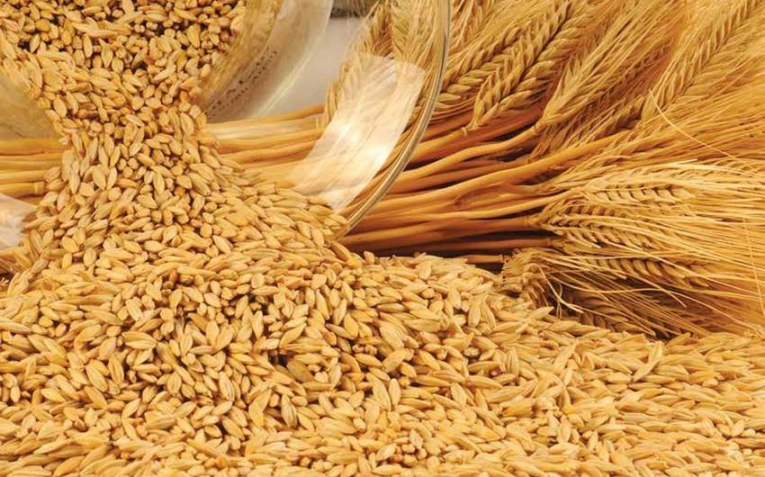 AgriCensus: Производство ячменя в мире ежегодно растет на 10%