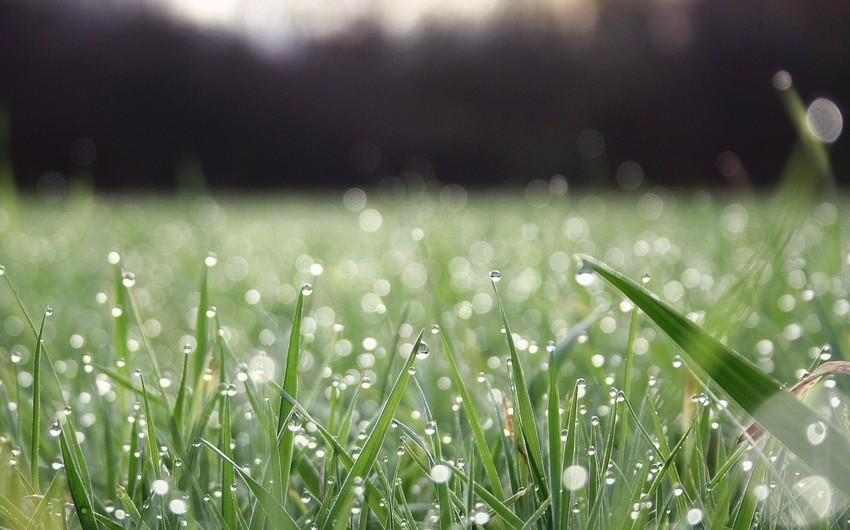 Havanın temperaturu 3-5 dərəcə aşağı enəcək, yağış yağacaq - XƏBƏRDARLIQ