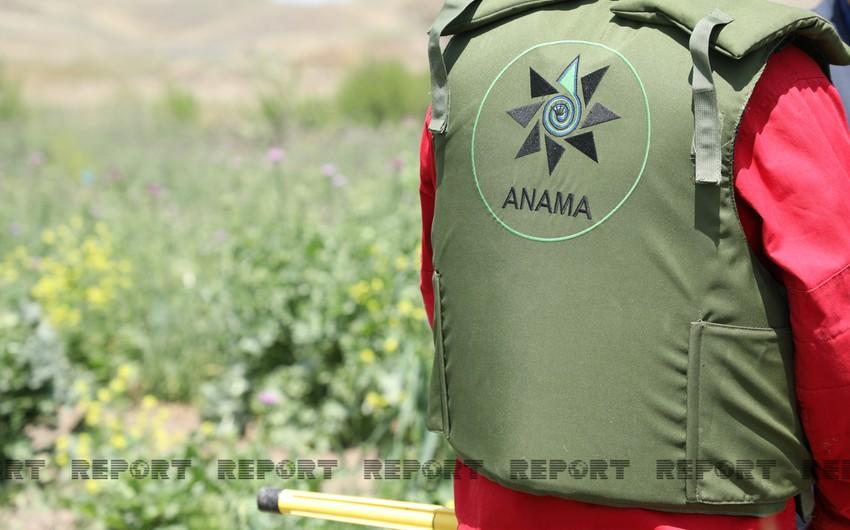 ANAMA: За неделю от мин и неразорвавшихся боеприпасов очищено 220 га территории