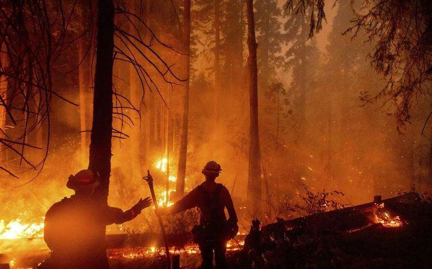 В Калифорнии 14 человек пострадали при тушении природного пожара