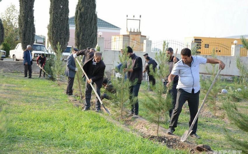 Cəbhə bölgəsində ağacəkmə aksiyası keçirilib - FOTO