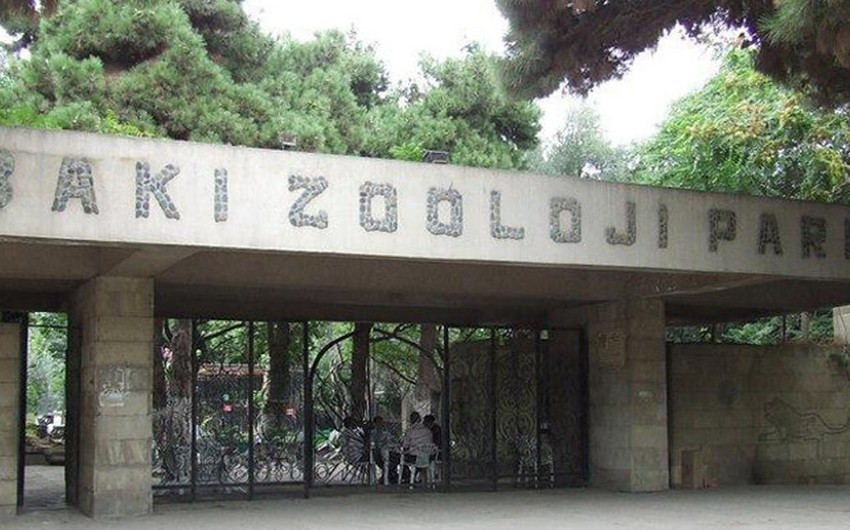 Bakı Zooloji Parkı kənd təsərrüfatı malları alacaq