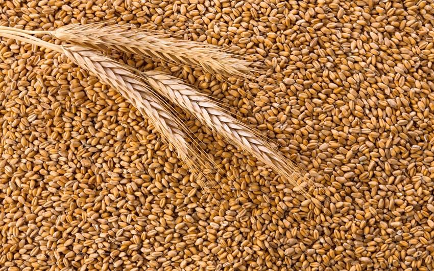 Импорт пшеницы в Азербайджан освобожден от НДС еще на 3 года