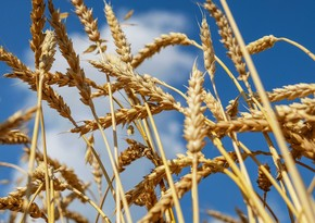Россия повышает пошлину на экспорт пшеницы