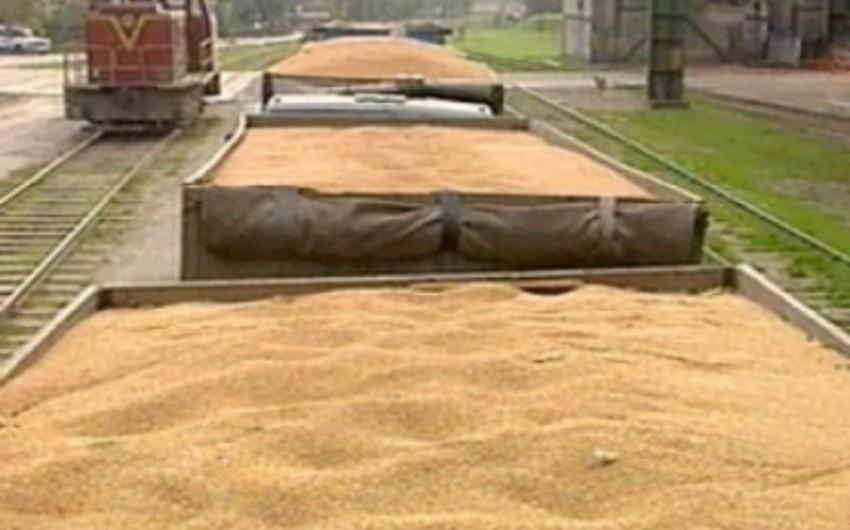 Dekabrda Rusiya Azərbaycana 127 min ton buğda ixrac edib
