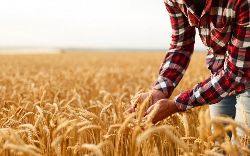 Azərbaycanlı fermerlər bu il 75 milyon manat subsidiya alıb