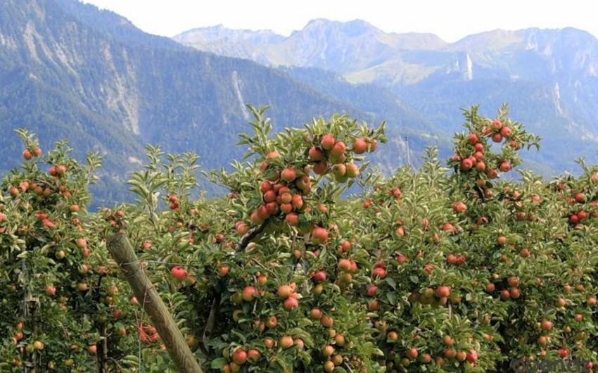 Azərbaycan ekoloji effektivlik indeksi üzrə dünyada top-40a daxil olub