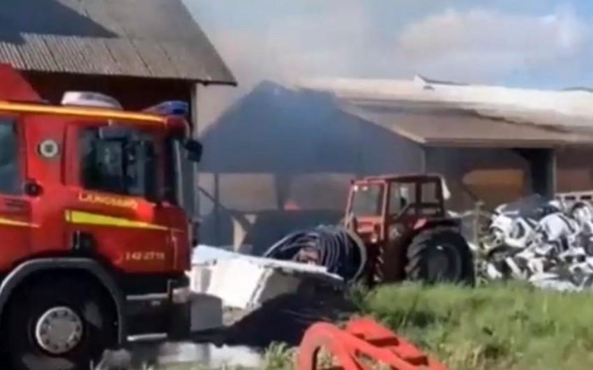 İsveçdə yanğın nəticəsində 100 min ev quşu tələf olub - VİDEO