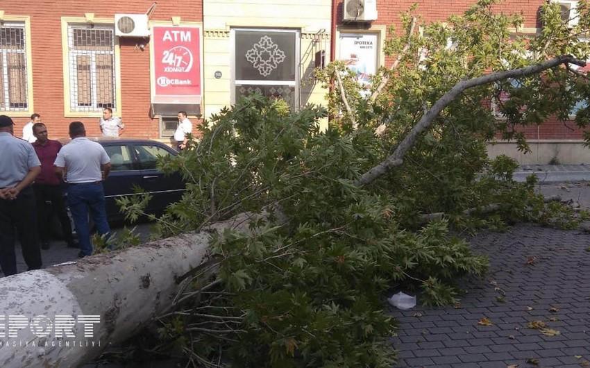 Непогода в западном регионе Азербайджана не обошлась без последствий - ФОТО