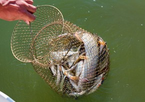 Браконьерам выписан крупный штраф за вылов рыбы