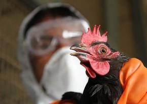 В Японии в 14 префектурах зафиксировали вспышку птичьего гриппа