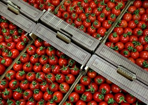 Azerbaijan increases tomato exports 14%