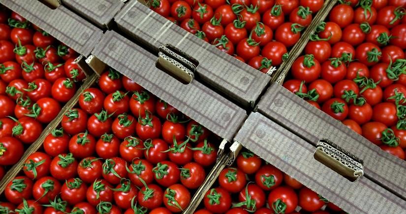 Azərbaycandan Rusiyaya pomidor ixracına icazə verilən müəssisələrin sayı 126-ya çatıb