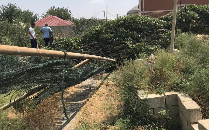 Güclü külək Abşeron rayonunda ağacı qaz xəttinin üzərinə aşırıb