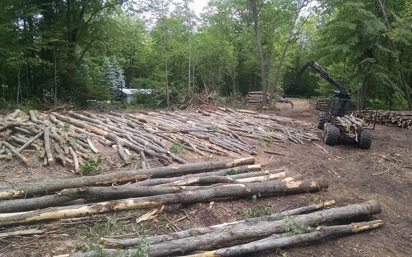 Bakıda ağacların qəsdən qurudulması faktları aşkarlanıb