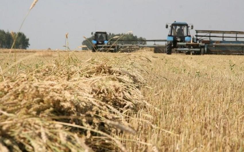 Azərbaycanda aqrar sektor 13% böyüyüb