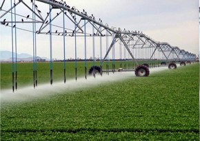 WB announces outlook for Azerbaijan's agriculture