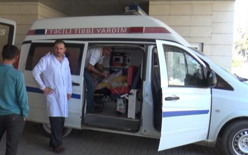 В Джалилабаде женщину укусила гюрза, состояние пострадавшей тяжелое