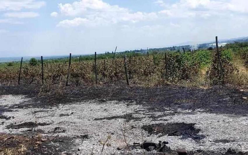 Gürcüstanda üzüm bağlarında baş verən yanğın söndürülüb - YENİLƏNİB