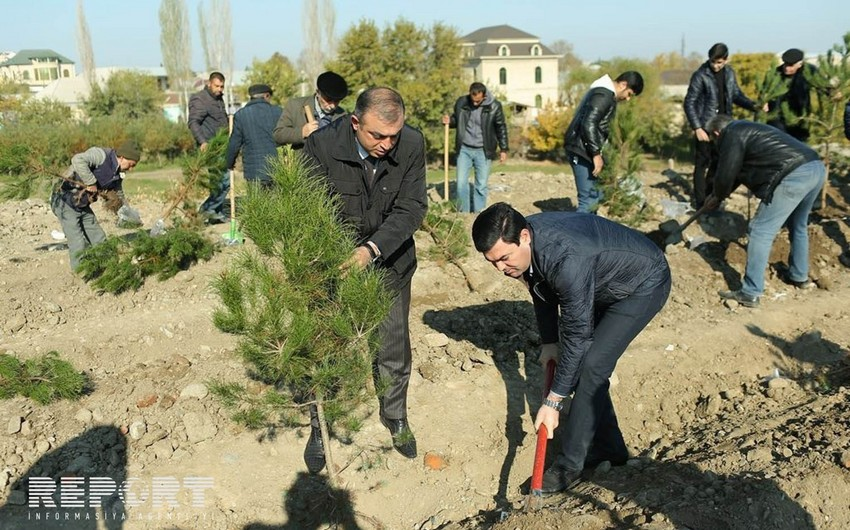 В связи с Днем государственного флага в Гяндже проведена акция по посадке деревьев - ФОТО