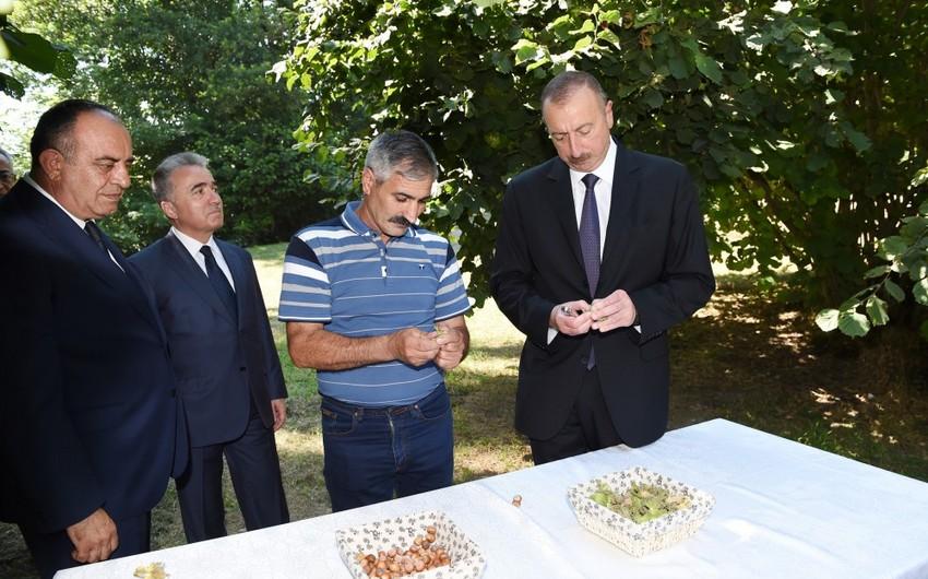 Azərbaycan Prezidenti Qaxda fındıqçılıq təsərrüfatında yaradılan şəraitlə tanış olub