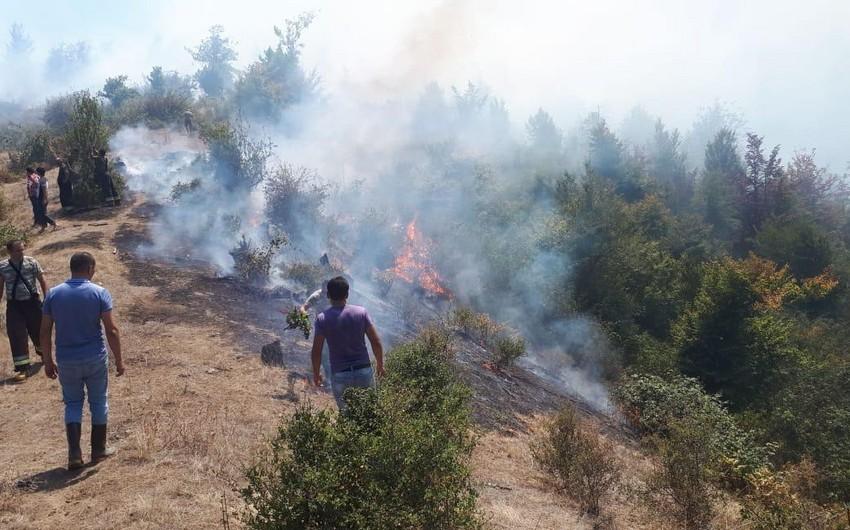 Hirkan Milli Parkında yanğının söndürülməsinə daha bir helikopter cəlb olunub - VİDEO - YENİLƏNİB-2