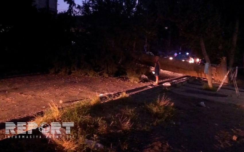 Şirvanda ağacın aşması nəticəsində elektrik enerjisi kəsilib - FOTO