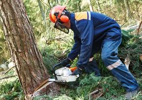 Bakıda qanunsuz ağac kəsməyə görə cinayət işi başlanıldı