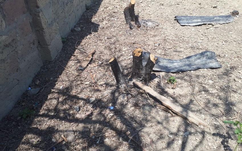 Yeni Ramanada 27 ağacın kəsilməsi ilə bağlı materiallar Baş Prokurorluğa göndərilib