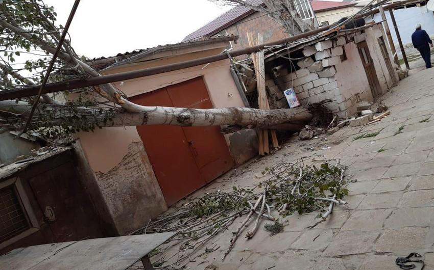 Qobustanda güclü küləyin aşırdığı ağac 120 abonenti qazsız qoyub