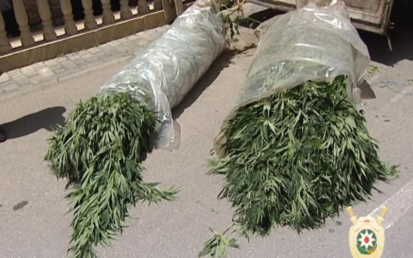 Bakıda narkotik tərkibli bitkilərin kultivasiyası ilə məşğul olan şəxs saxlanılıb