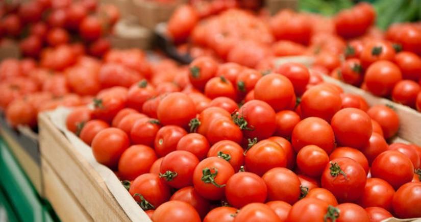 İndiyədək Azərbaycanın 187 müəssisəsindən Rusiyaya pomidor ixracına icazə verilib