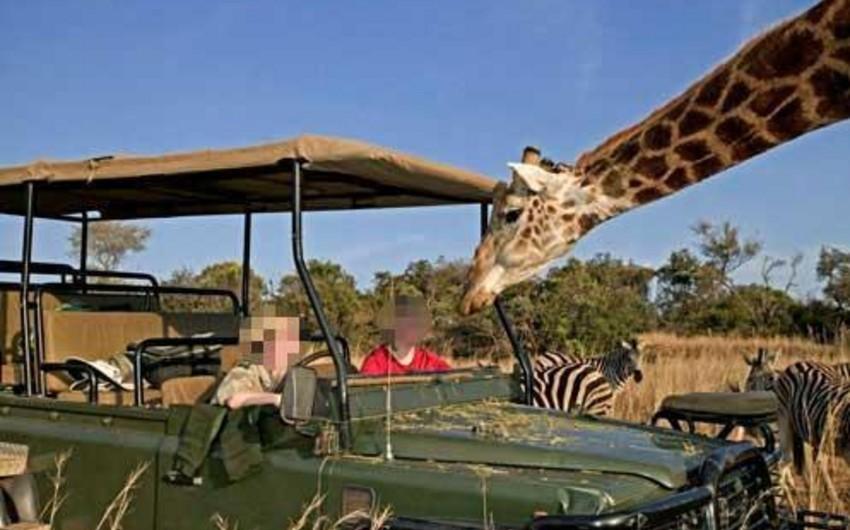 Afrikada zürafə film çəkilişi zamanı rejissoru öldürüb