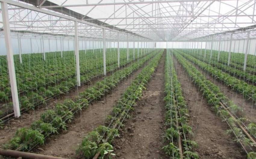 Зампред АПБА: Пораженную вирусом сельхозпродукцию уничтожают особым способом