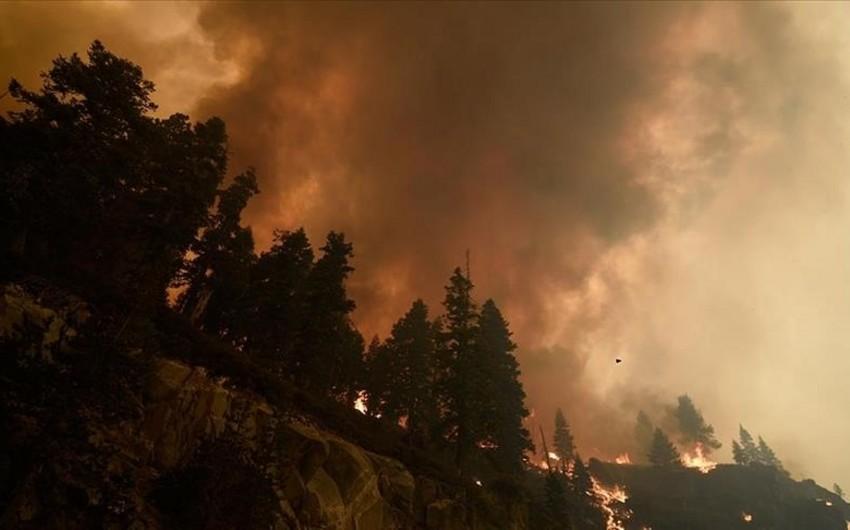 Kaliforniyada meşə yanğınlarının miqyası açıqlanıb