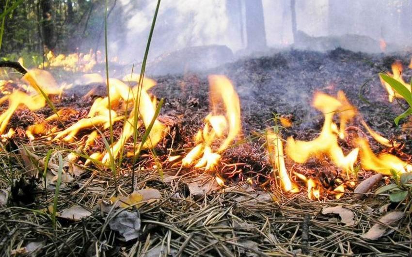 Nazirlik: Oğuzda dağlıq ərazilərdə baş verən yanğın məhdudlaşdırılıb