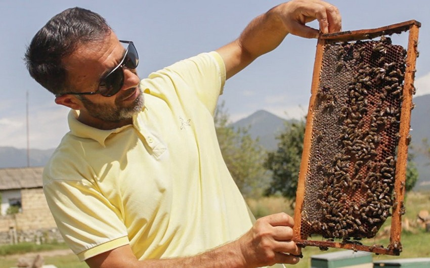 Azerbaijan may establish Institute of Beekeeping