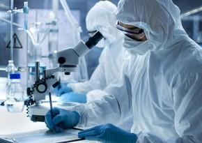 Ученые заявили об угрозе пандемии от еще одного вируса летучих мышей