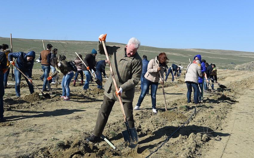 Azad Rəhimov Rusiya Olimpiya Komitəsinin vitse-prezidenti ilə ağac əkib