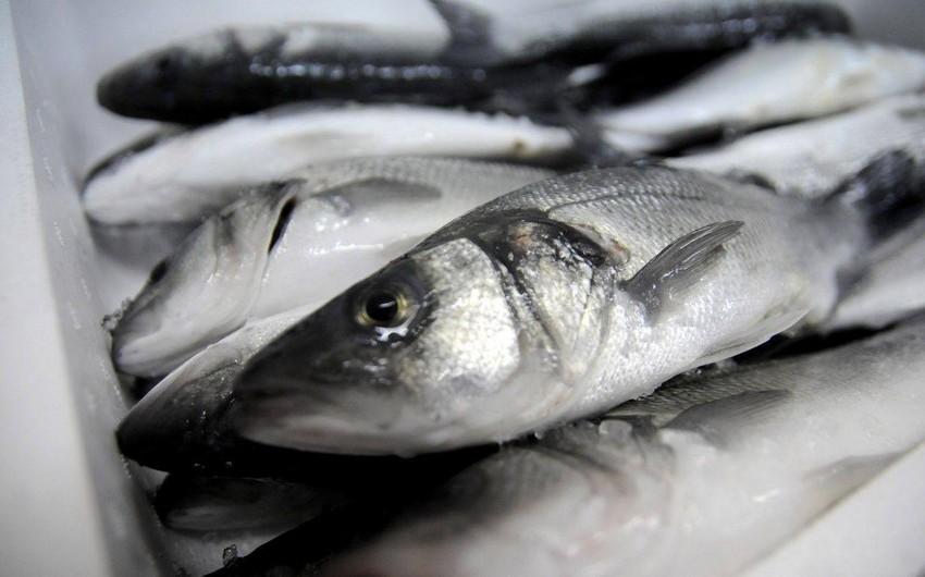 Azərbaycan Ukraynadan 60 tondan çox dondurulmuş balıq idxal edib