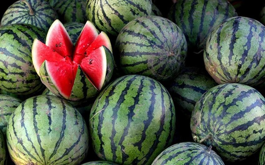 Эксперт: Фермеры стараются ускорить выращивание арбузов и продать их по выгодной цене