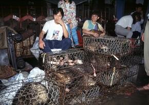 СМИ: В ВОЗ связывают появление COVID-19 с торговлей животными в Китае
