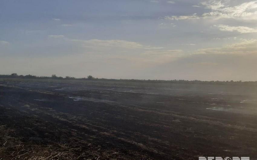 Kürdəmir rayonunda biçilmiş taxıl sahəsi yanıb - FOTO - VİDEO - ƏLAVƏ OLUNUB