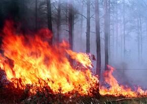 Ombudsman Ermənistanın ekoloji terroru barədə beynəlxalq ictimaiyyətə müraciət edib