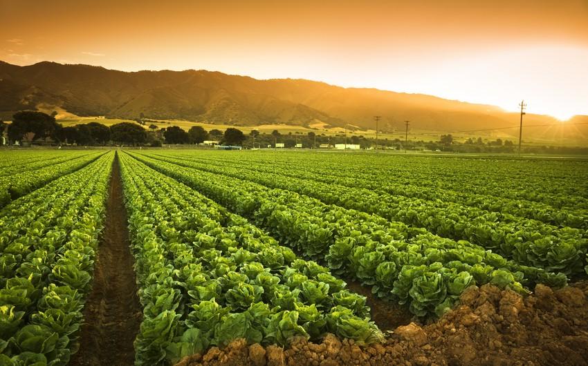 Экспортоориентированность станет одним из главных критериев при страховании сельхозкультур
