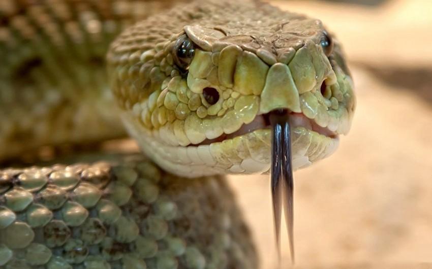 В Горанбое змея укусила местного жителя
