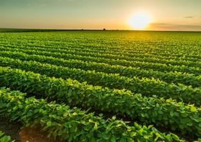 Sahəsi 10 hektardan çox olan fermer torpaqları aqrokimyəvi analizdən keçir