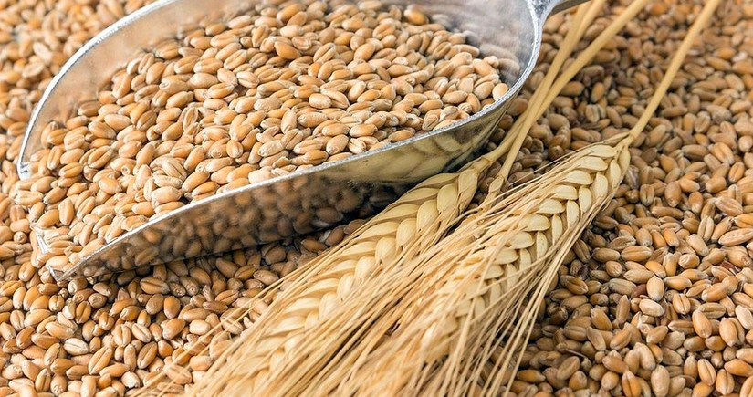Export duty on wheat from Russia to increase to $67 per ton