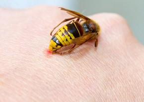 Ağstafada arı sancan kişi dünyasını dəyişib