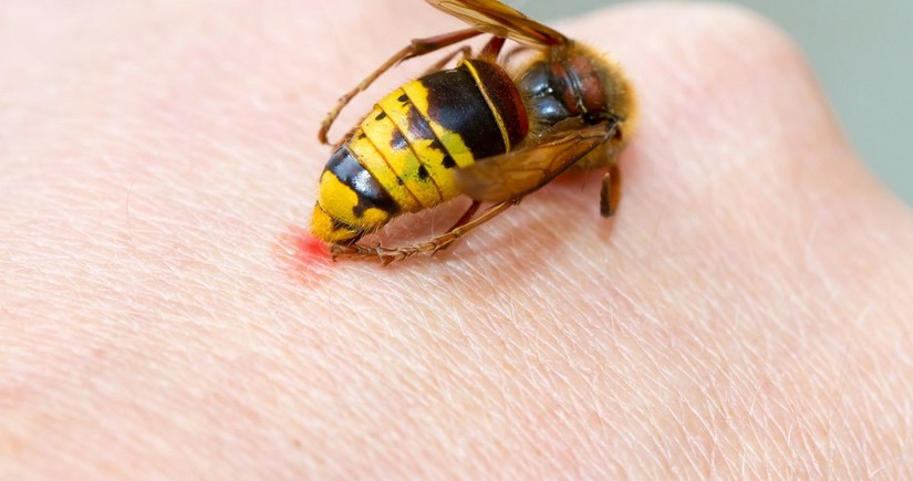 В Агстафе мужчина умер после укуса осы